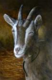 Hanneke Haaksma, onze geit, 60 x 40