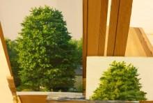 Janet Nieuwland, boomstudie, links de foto