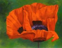 Maria Lenkens, klap voor deze roos, 30 x 40