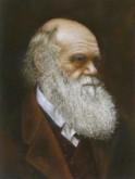 Paola Schmitz, Darwin, 40 x 30