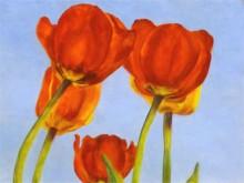 Claudia Bevers Tulpen 30 x 40