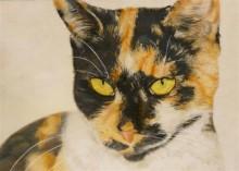 Claudia Bevers, eigen kat, 35 x 50