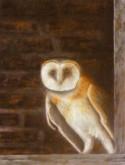 Steenuil, H. van Ravaenswaaij, 40 x 30