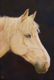 Trude Hendriks, 60 x 40