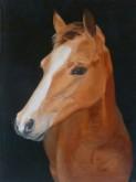 Trude Hendriks, jong paard, 40 x 30