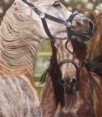 De paarden van mijn dochter 50   x   40 cm Debora Brouwer
