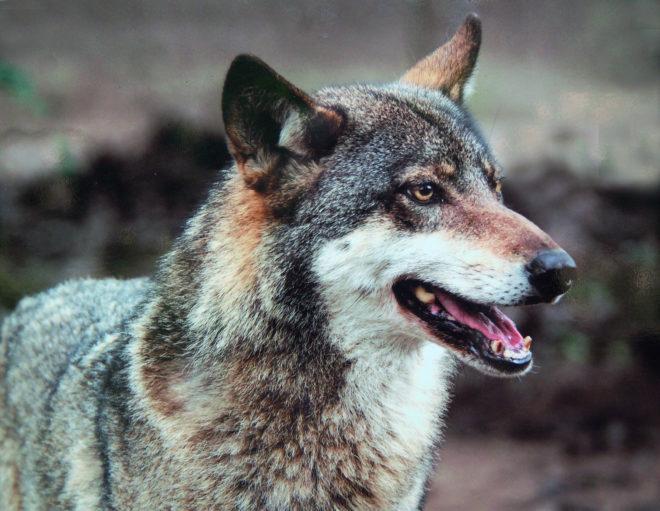workshop wolvenkop schilderen