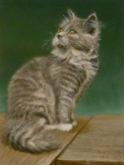 Ria Hofstee, onze kat, 5e opdracht, 40 x 30