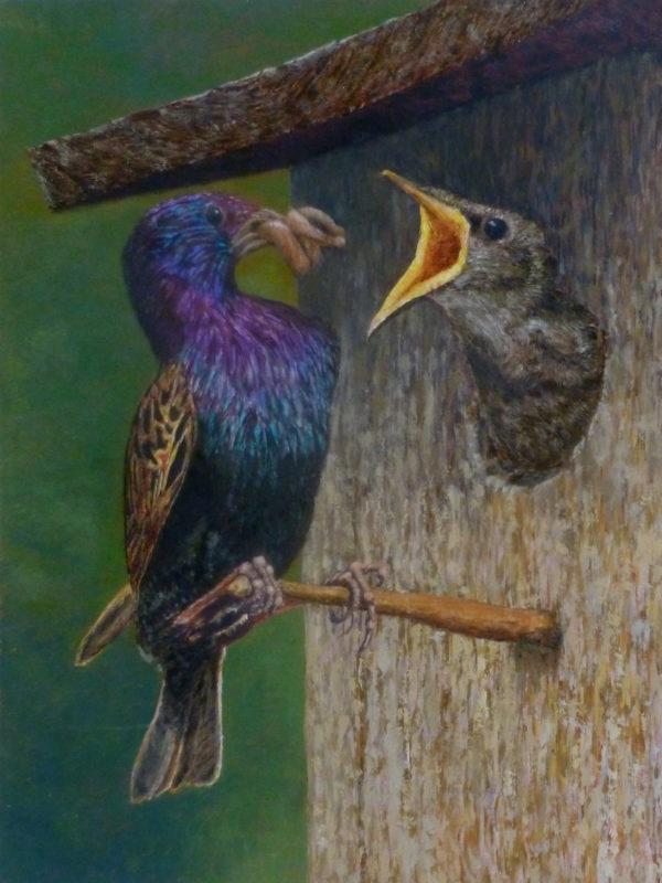 Thea Jonker, kleurig voorgeslacht, 40 x 30