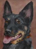 Hetty Neyenhuis, mijn hond, 5e opdracht, 40 x 30