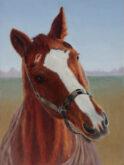 Godelive Kip, mijn paard, 40 x 30, 5e opdracht